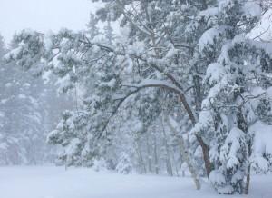 blizzard_trees102606