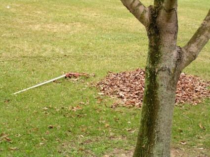 raked_leaves_pile_212753